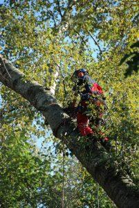Bomen frezen