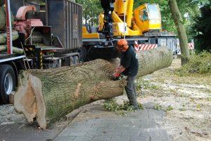 Lang hout uitslepen